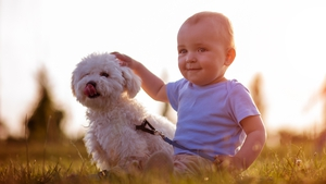 Babies and dogs can become the best of friends with some planning