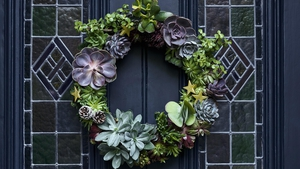 How to make your own Christmas wreath using succulents