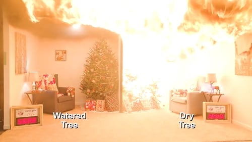 The video shows the difference between a watered tree and a dry tree when exposed to a spark
