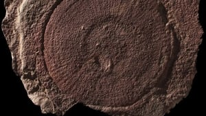 "The study involved the investigation of fossils of disc-shaped creatures called ""eldonids"""
