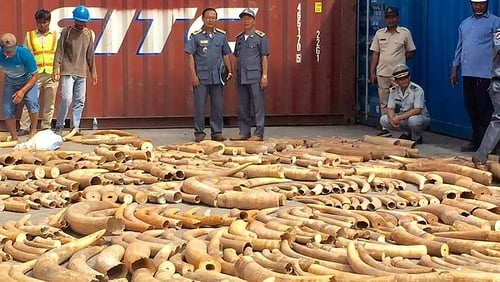 Cambodia seizes record 3000kg haul of African ivory