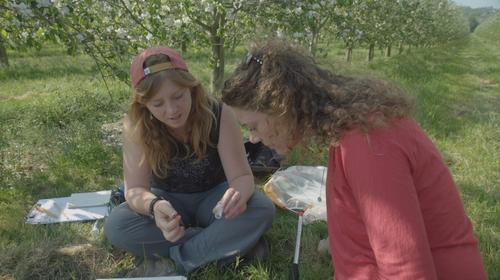 Eco Eye investigates the plight of the Irish Bumblebee