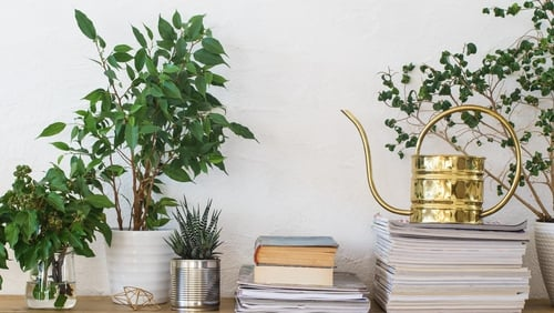 plant therapy is on the rise.