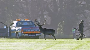 The OPW says that the deer cull was carried out as part of the 'sustainable management' of wild deer in Phoenix Park