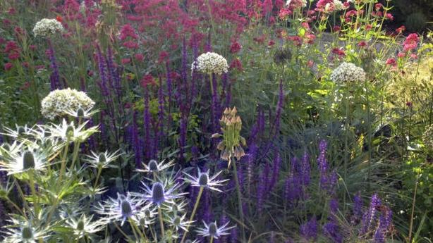 Plants which thrive in dry areas (Sue Townsend Garden Design Ltd/PA)