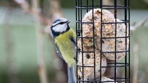 Tips for feeding hungry birds in cold weather