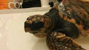 Rare turtle found off Donegal coast