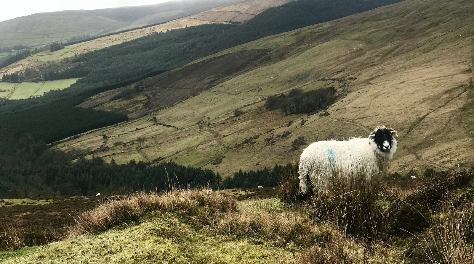 Bill to protect landowners from claims by hillwalkers