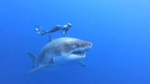 Images: @JUANSHARKS /oneoceandiving.com/@OceanRamsey