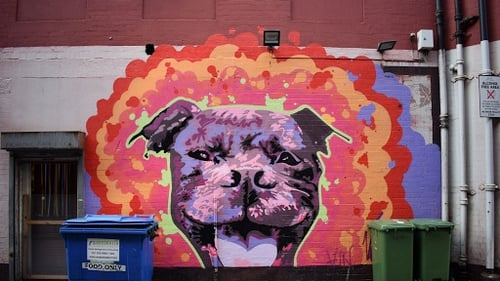 Hank the Dog painted in September 2016 in Belfast by Verz. Photo: Omar El Masri
