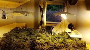 Gardaí discovered a cannabis growing operation