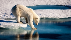 """Despite their popularity with media producers, images of polar bears may not be an effective way to engage the public with climate change"""