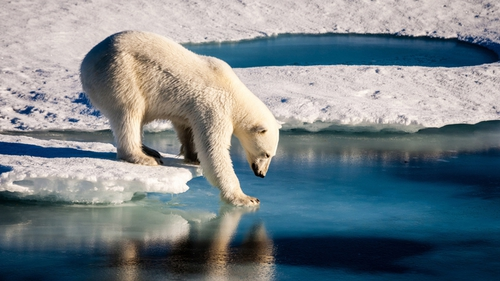 """""""Despite their popularity with media producers, images of polar bears may not be an effective way to engage the public with climate change"""""""