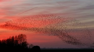 """One simple explanation is the need for warmth at night during the winter: the birds need to gather together at warmer sites and roost in close proximity just to stay alive."" Photo: Menno Schaefer/ Shutterstock"
