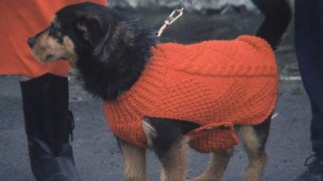 Doggie Fashion