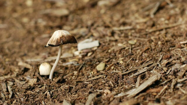 Spent mushroom compost is good to use as a mulch (Thinkstock/PA)