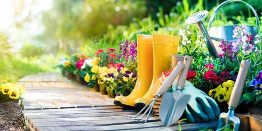 Gardening Advice - Gerry Daly