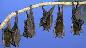 There are over 1,300 bat species in the world, many living throughout Ireland.