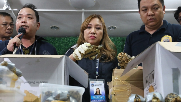 Philippine police find 1,529 turtles abandoned inside luggage at Manila airport