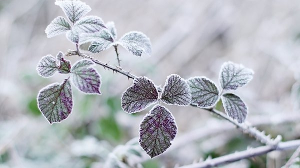 A widespread sharp to severe frost, with some ice patches is forecast