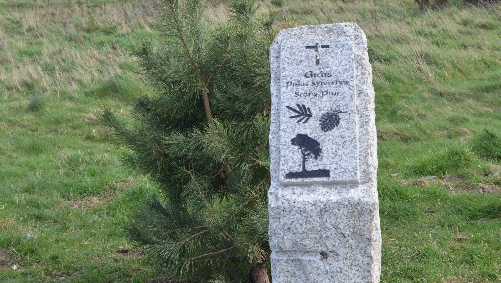Image - One of the Ogham stone markers on the Dodder Valley Tree Trail