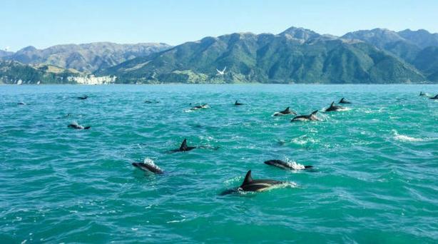 Dolphins off Kaikoura (iStock/PA)
