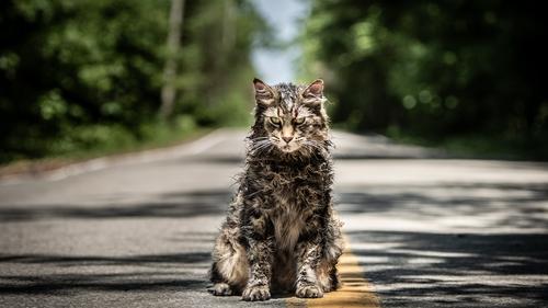 Feline freaky?