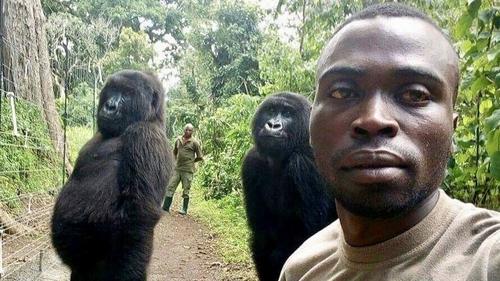 Courtesy: Virunga National Park in eastern Congo