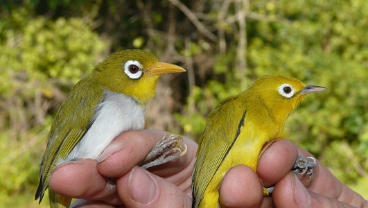 Irish zoologists discover two new bird species in Indonesia