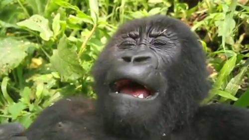 Ranger explains gorilla selfie that tickled the world
