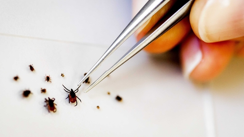 People are most likely to be bitten by ticks in areas in the south and west of the country