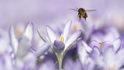 There has been a dramatic die-off of pollinating insects, especially bees