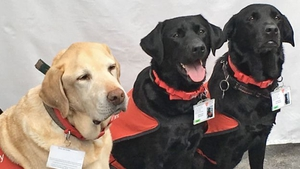 "Three of the five ""canine teaching assistants"". Photo: BBC"