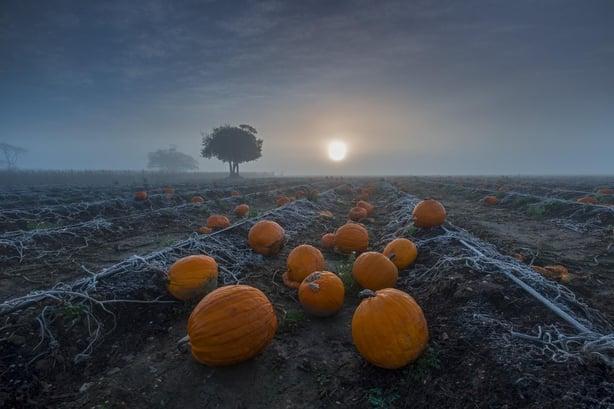 Pumpkins at sunrise