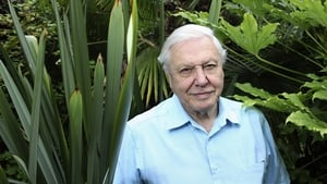 """David Attenborough commands the attention of millions of people and can turn our gaze to the considerable environmental challenges of our time"""