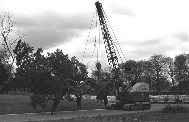 Strawberry Tree moved (1967)