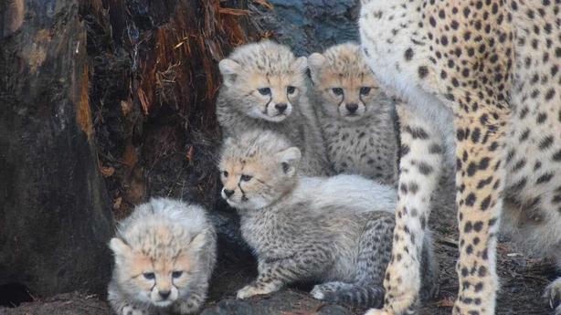Newborn Cubs