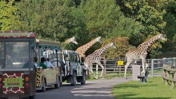 Giraffes @ Fota Wildlife Park