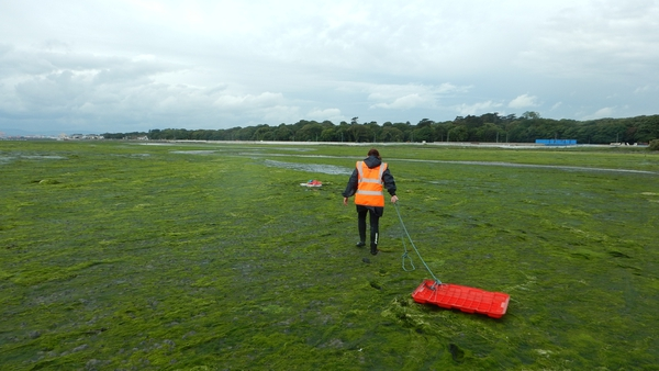 When the estuary turns green: research work at the Tolka estuary