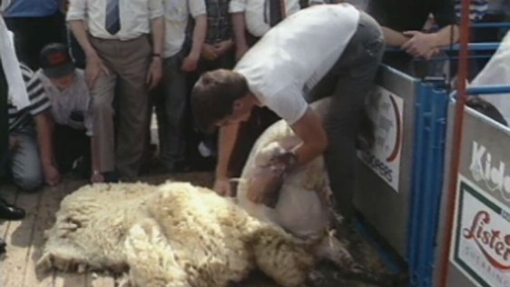 National Sheep Shearing Championships