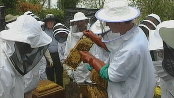 Cross Border Beekeeping