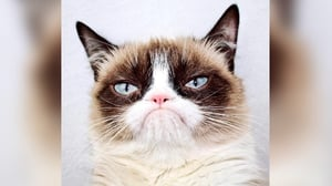 Grumpy Cat had millions of online fans (Pic: Instagram)