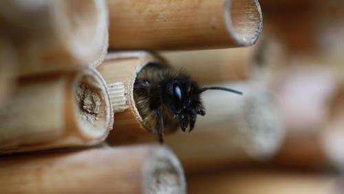 Happy World Bee Day!