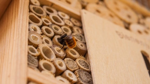 Bees can be fussy hotel guests (iStock/PA)