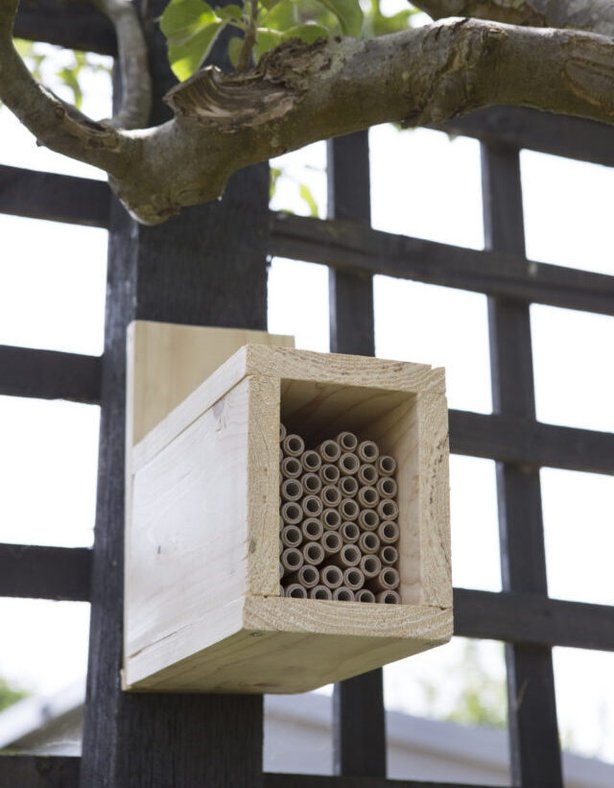 Look after your bee hotel (Sarah Cuttle/PA)