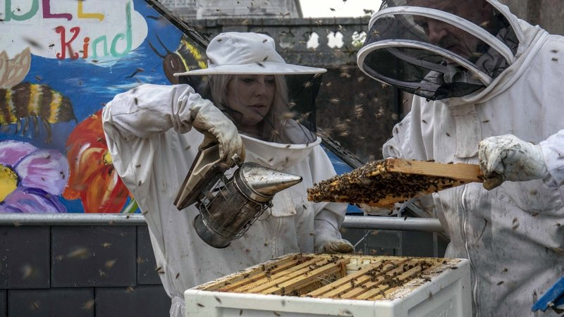 The Cork city centre has eight beehives