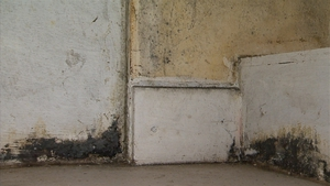A survey showed that 76% of respondents have mould in their homes