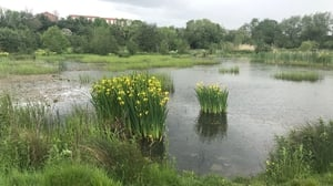 Tolka Valley Park has adopted re-wilding policies and some people are calling for the same to be done at Phoenix Park