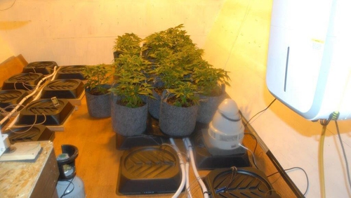 The cannabis was discovered during a search in the Stamullen area yesterday