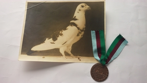 Paddy the pigeon was awarded the Dickin Medal